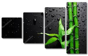 Бамбуковый росток на черном фоне