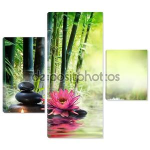 массаж в природе - лилии, камнях, бамбуке - понятие дзэн
