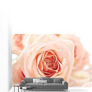 Букет красивых свежих роз, крупным планом