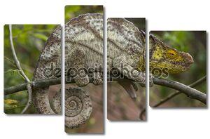 ящерицы хамелеоны крупным планом