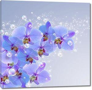 Орхидеи и пузыри