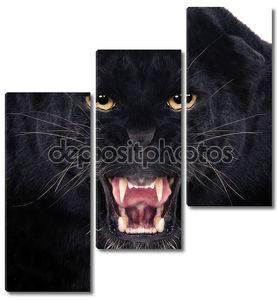 Черный леопард с открытой пастью