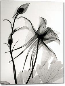 Цветы на негативном снимке