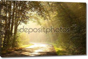 Восходящее солнце с деревьями