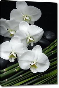Орхидеи и zen камень на пальмовых листьев текстуры