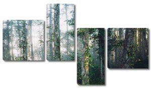 Свежесть лесного утра