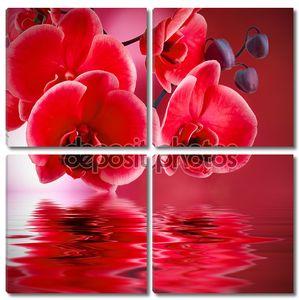 Красная орхидея над водой