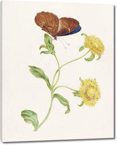 Бабочка на бутоне растения с желтыми цветами