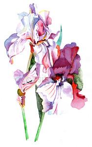 Гранж-фон с цветком с пространством для текста или изображения