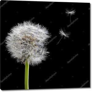 Старый Одуванчик и летающие семена, сложенные