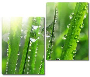 Трава с каплями росы в лучах солнца