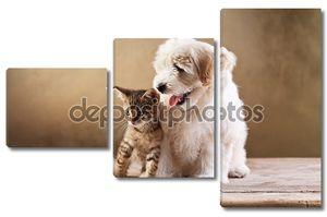 Лучшие друзья - котенок и малые Пушистая собака