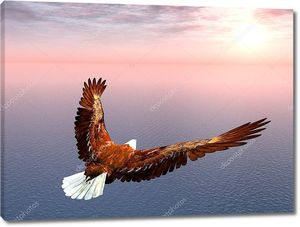 Морской орел летит к солнцу
