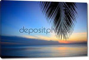 Силуэт кокосовых листьев