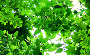 Яркая листва