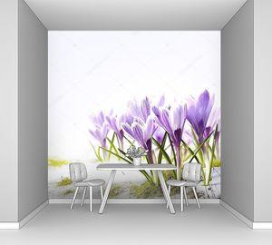 Весенние цветы в снегу оттепель