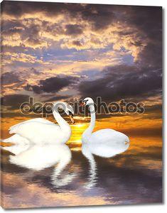 Два лебедя на озере в закат