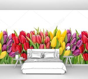 Цветы тюльпана
