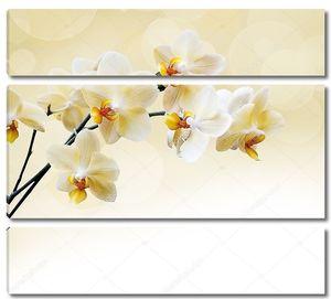 Красивая белая орхидея с желтыми серединками