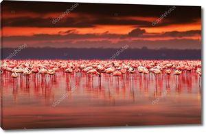 Африканские фламинго на закате