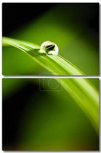Капля воды на траве