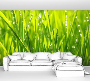 Капли росы на траве