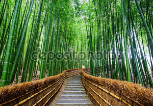 Путь в бамбуковый лес