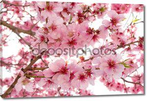 весенние цветы яблони