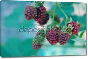 Освежающие летние фрукты