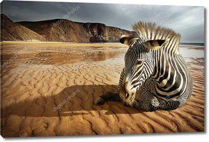 Зебра на пляже