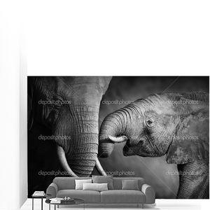 Слон любовь (художественная обработка)