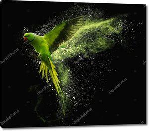 Летящий попугай с цветными брызгами