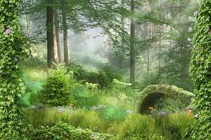 Прекрасный лес