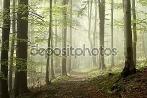 Лесная тропа на туманное утро осенью
