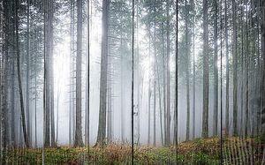 Утренний хмурый туман