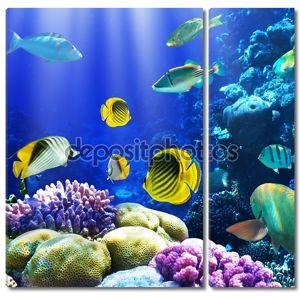 Коралловый риф в прекрасном Египте