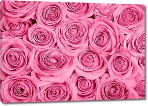 Розовые розы ковром