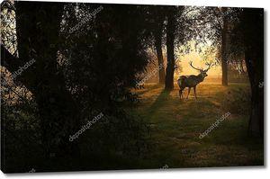 Красивые олень в лесу с удивительной огнями утром в октябре