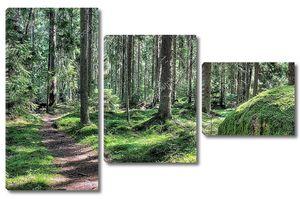 Тропинка в волшебном лесу