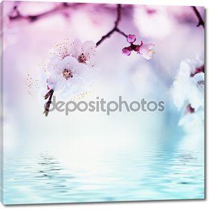 Абрикосовое дерево цветок