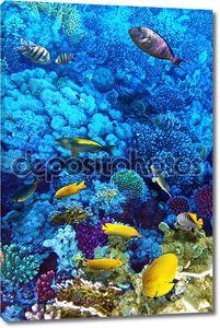 Кораллы и рыбы в Красном море. Африка