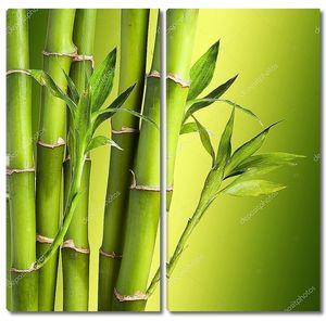 Свежий бамбук