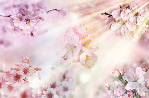 Солнце и цветы вишни