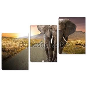 Слон, ходить по дороге