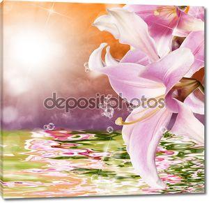 Экзотические Тропический закат и воды красивый цветок