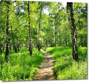 Березовый лес в Солнечный день. зеленые леса в летнее время