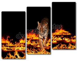 Тигр в пылающий огонь