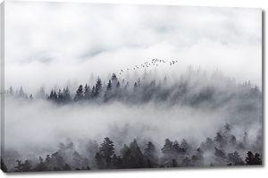 Бор покрыт туманом