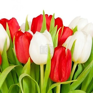 Красивый букет из тюльпанов