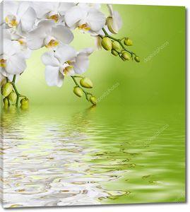 Красивая белая орхидея у воды